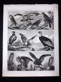 Heck 1849 Antique Bird Print. Owls, Vulture, Hawk, Eagle